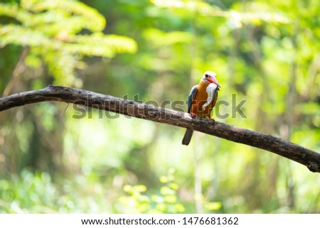 A stork - billed kingfisher is perching on a tree branch.