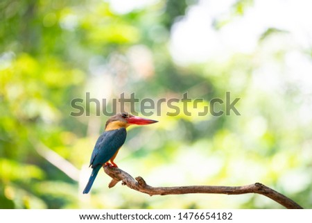 A stork - billed kingfisher is perching on the end of a tree branch.