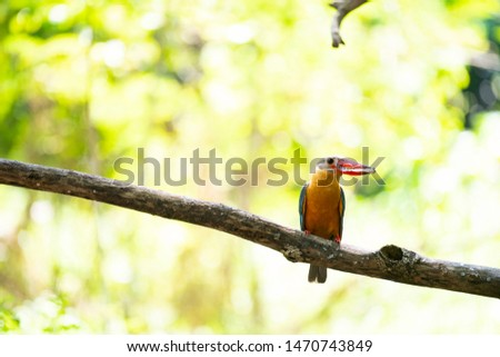 A stork - billed kingfisher with fish prey is perching on a tree branch.
