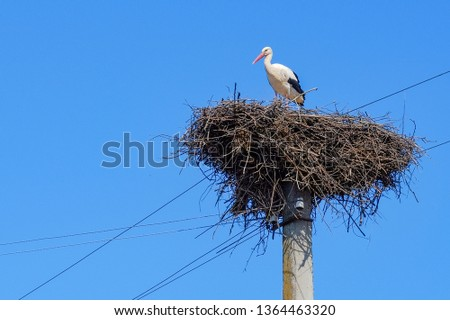 A stork in a large nest on a power pole and a blue sky in the background.