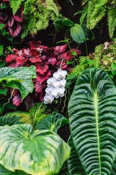 A strand of wild white orchids nestled between heavy leaves and plants
