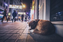 A stray abandoned dog during the night on the busy city street in Istanbul. People walking past the hungry abandoned dog.