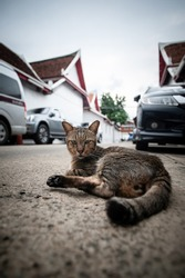 A stray cat lying on the street