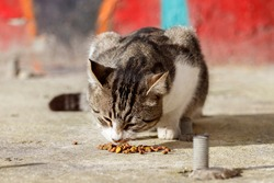 A stray cat on sidewalk eats cat food. Close-up. Istanbul, Turkey.