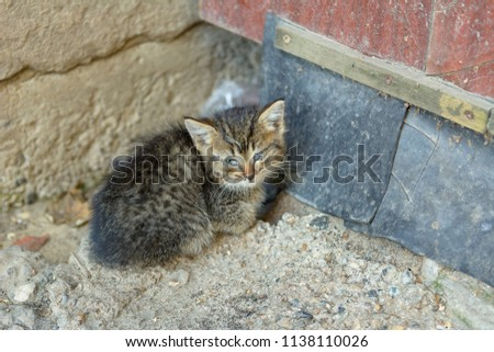 A stray cat sick with feline panleukopenia #1138110026