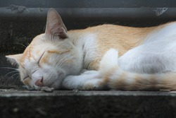 a stray cat sleeping peacefully on cornish white and brownish in color
