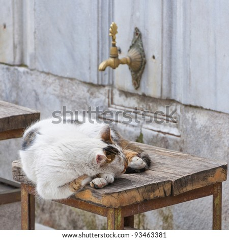 A stray cat sleeps on a stool at the laleli mosque in the turkish city of Istanbul.