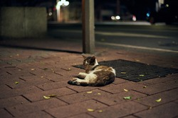 A stray cat taking a nap on the road