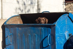 A stray dog ??looking out of the trash can