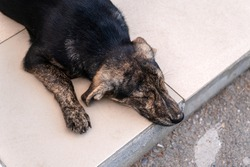 A stray dog of variegated color sleeps on steps made of stone. Yellow and black coat colors.