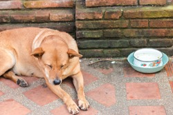 A stray dog ​​sitting on a stairway to the temple. Thai brown dog drowsiness.