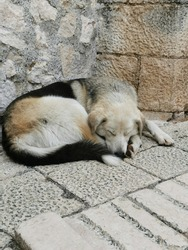 A stray dog sleeping on a street