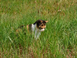 A stray kitten, with black and orange spots on the fur, hidden among the tufts of grass in a meadow in the countryside. Concept of abandonment of pets
