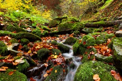 A stream and waterfall in the Carpathians among the autumn beech forest, large stones with green moss and fallen leaves of trees. Fallen autumn leaves in a mountain stream. concept of virgin nature.