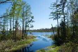 A stream flows into a pond