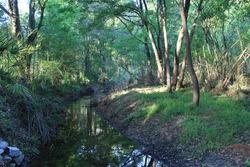A stream flows through the woods