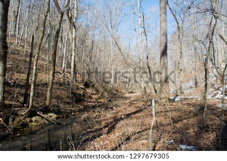 A stream in the defoliate winter forest