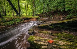 A stream in the forest. Forest cold creek flowing. Cold creek in forest. Forest stream flow