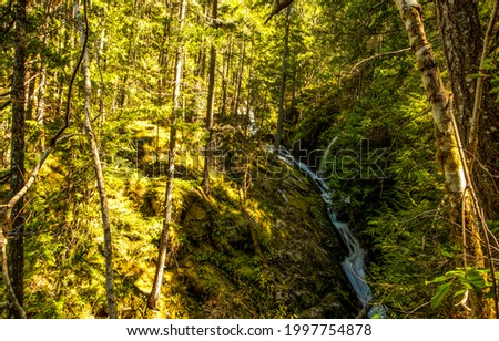 A stream in the forest thicket. Forest stream view. River stream in deep forest. Wilderness forest stream