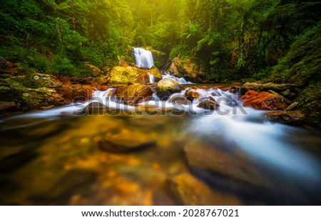 A stream in the forest. Waterfall stream in deep forest. Forest river waterfall landscape. Waterfall stream water