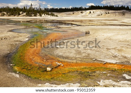 A stream is painted in bright green and orange colors as minerals rise from various hot springs and geysers in the middle of the Norris Geyser Basin in Yellowstone National Park.