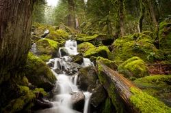 A stream meanders through a beautiful rain forest with cedar and fir trees near Harrison Lake in British Columbia, Canada.