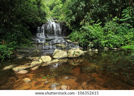 A stream originating from a rain forest water fall