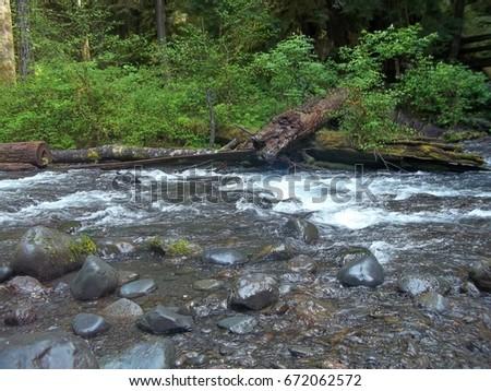 A stream through the woods #672062572