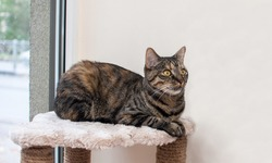 A stripped brown cat looking afrain lying on cat bar