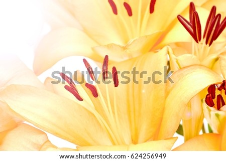 A studio photo of flower orange liliums #624256949