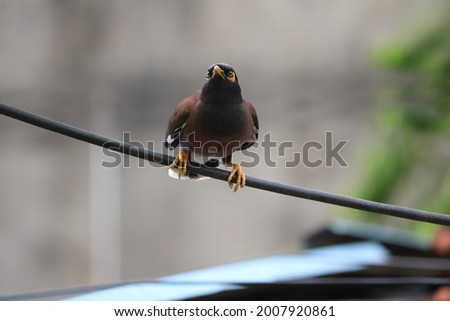 A stupendously alluring bird with bright color. Strong and always protective towards its babies Always salute its intelligence and hard work that is performed by the bird in this world.  Stock photo ©