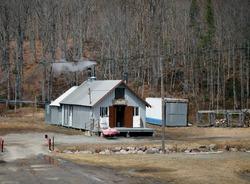 A sugar shack in a maple grove