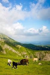 A summer landscape somewhere in Stara Planina, Bulgaria