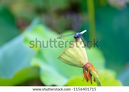a summer lotus flower #1156401715