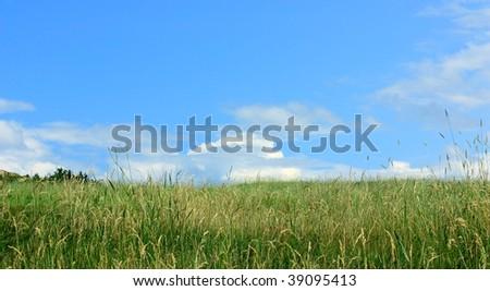 A summer meadow near Twillingate Newfoundland