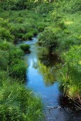 A Summer Stream Runs through High Point State Park in New Jersey