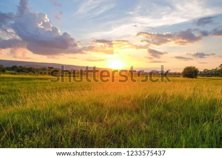 A summer sunset over grass field with lonely tree in Thailand. #1233575437