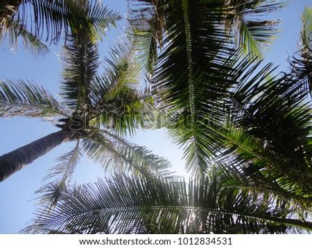a sunny day amongst the tropics #1012834531