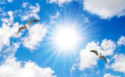 a sunny sky and flying seagulls