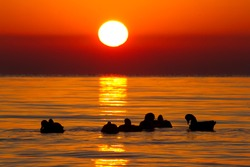 A sunrise over Lake Erie in Erie, Michigan with ducks silhouetting the lake.