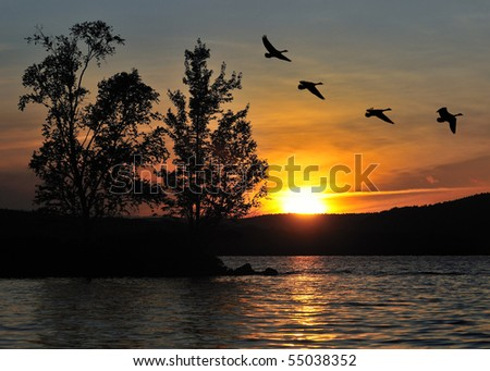 A sunset over the Ottawa River, with trees and geese silhouetted against the sky.