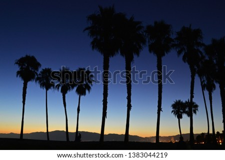 A sunset renders palm trees in silhouette on the California coast #1383044219
