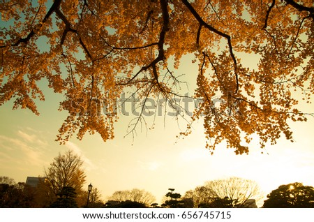 A sunset sereen of yellow sky surrounded with yellow and orange leaf in altumn season in tokyo japan Stockfoto ©