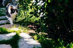 A surprised cat walking in a park near rose bushes