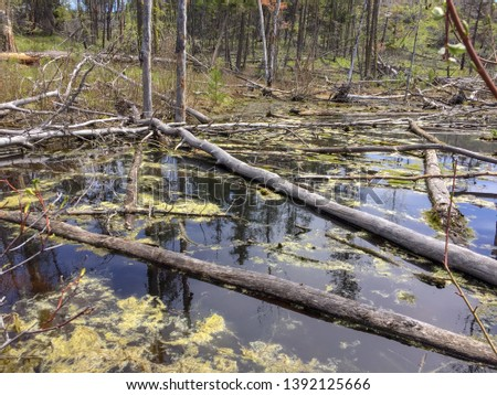 A swamp on McDougall Trail in Kelowna in the Okanagan Valley, British Columbia, Canada