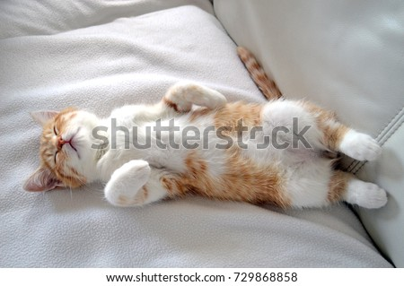 A sweet and beautiful little red and white kitten cat lying on the back on a white carpet and sleeping with its paws up in the air