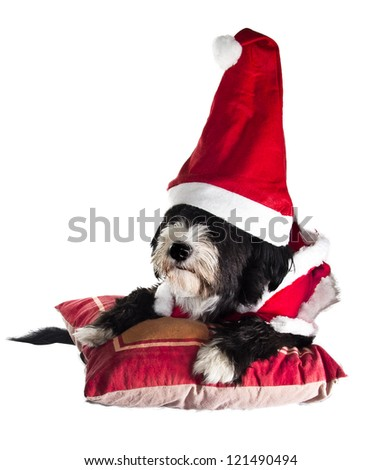 a sweet assistant of Santa Claus - stock photo