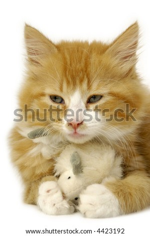 A sweet kitten is holding a toy mouse.