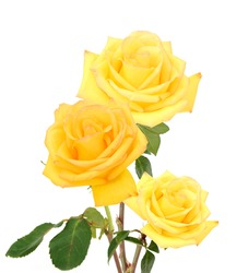 A sweet yellow rose gift