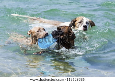 a swimming dogs with plate